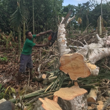 A Konomala guy helping clear the trees